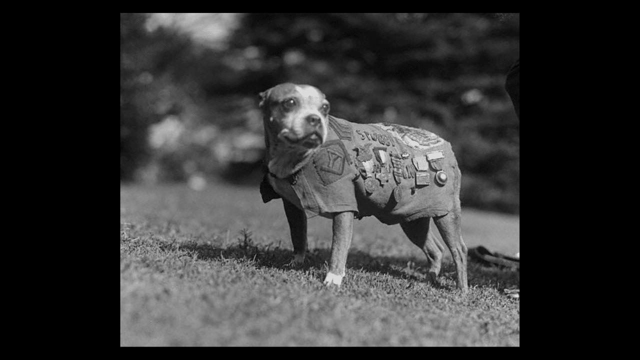 Sergeant Stubby, World War I